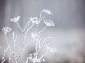 shutterstock_winter plants