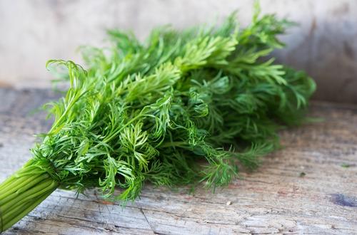 shutterstock_fennel