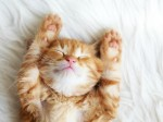 shutterstock_sleeping cat