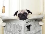 shutterstock_dog