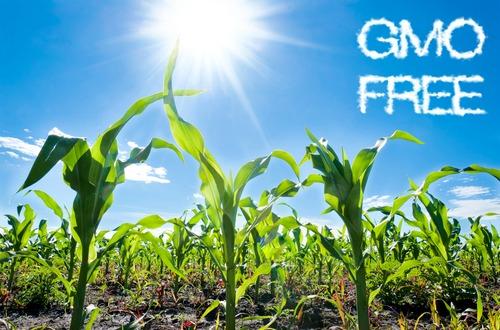 gmo free M