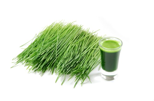 wheat grass M