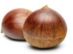 chestnut M