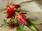 hibiscus flower calyx m