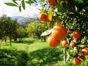 oranges m