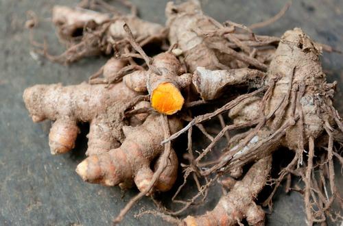 fresh turmeric roots m