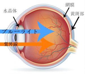 目の構造イメージ