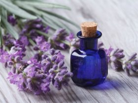 lavender-m