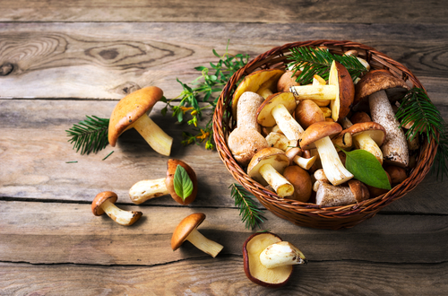 fresh picked mushrooms