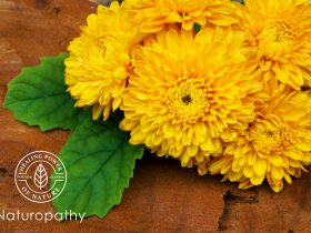 chrysanthemum-eyecatch