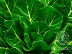 collard greens-eyecatch
