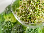 broccoli sprouts - eyecatch