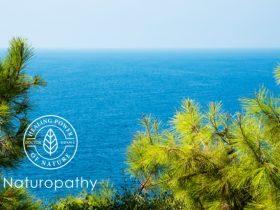 pine branches coastal 650 pycnogenol eyecatch