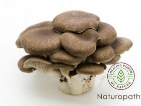 oyster mushroom-eyecatch