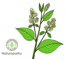 plant similar