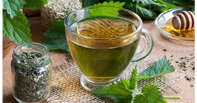 nettle tea-630