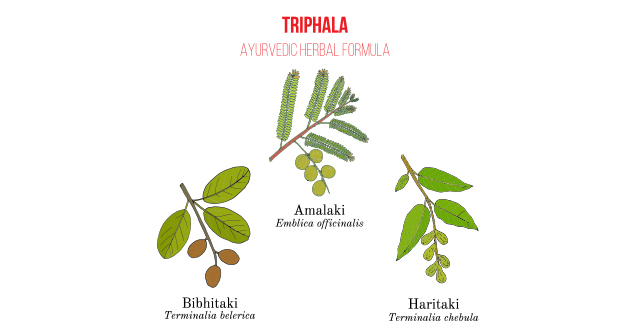 triphala drawing-630