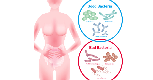 good and bad bacteria-630