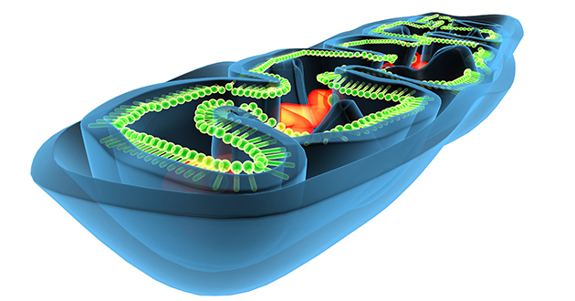 mitochondria 073118-630