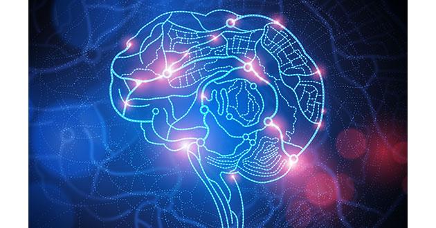 brain function-630