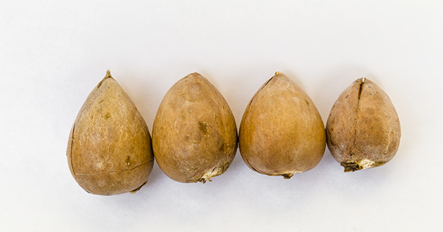 avocado seeds-630