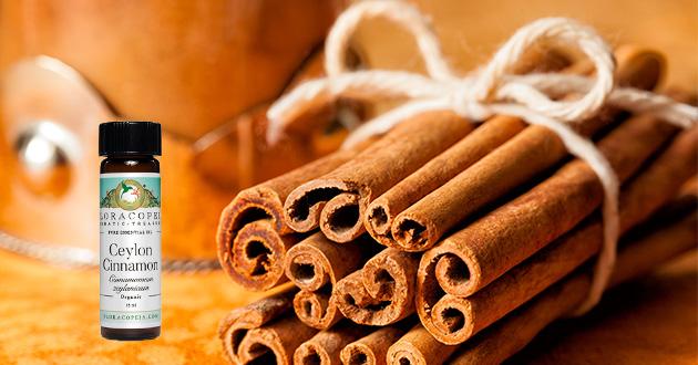 cinnamon stick and eo bttl