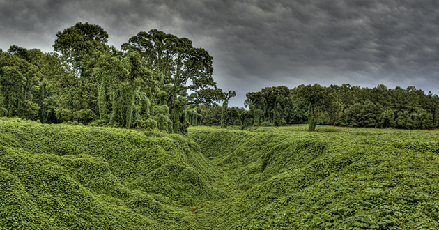 kudzu covers the land-630