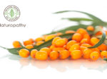 sea buckthorn-eyecatch