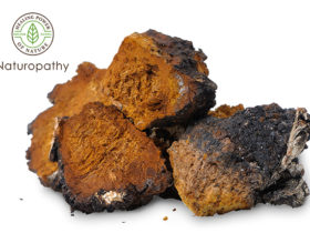 chaga isolated-eyecatch