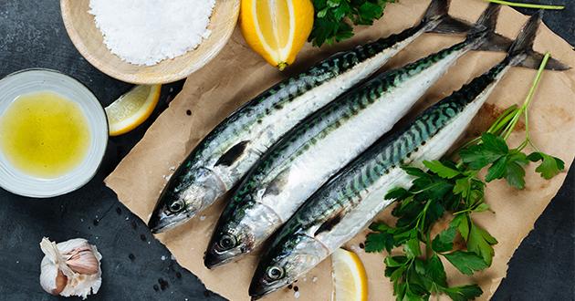 fresh mackerel-630