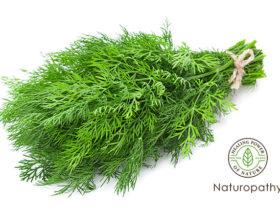 dill herb-eyecatch