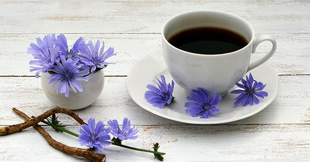 chicory coffee-630
