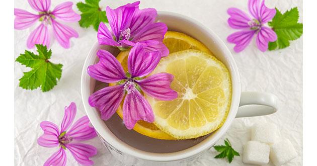 common mallow tea-630