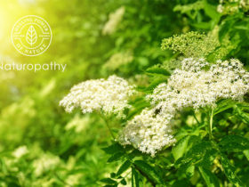 elderflower-eyecatch
