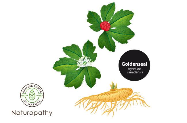 goldenseal 022719-eyecatch