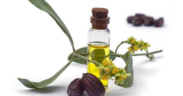 jojoba oil-630