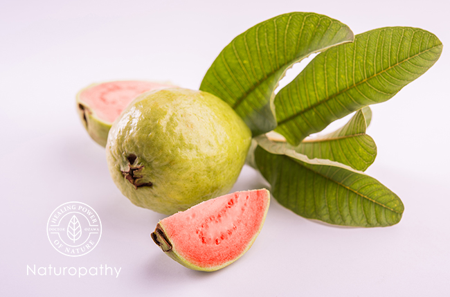 guava fruit and leaves-eyecatch
