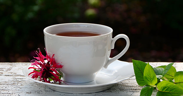 monarda didyma tea-630