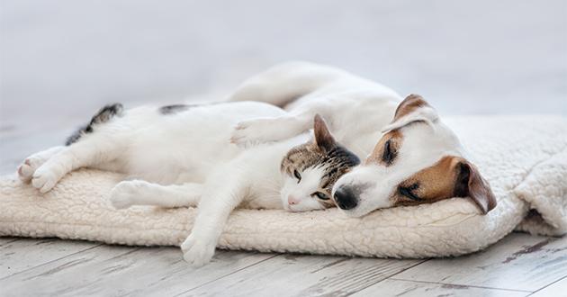 pet dog and cat-630