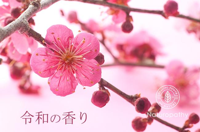 梅の花ピンク-eyecatch
