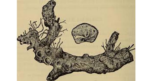 stone root-630