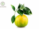 Citrus reticulata-mandarin-eyecatch