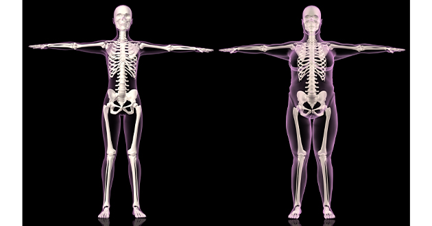 female skeleton slim and overweight-630