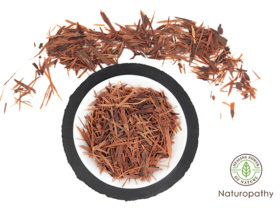 pau d'arco bark tea-eyecatch
