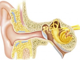 ear canal m