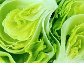 lettus fiber m
