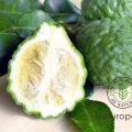 【精油:ベルガモット】~柑橘系の爽やかな香りは沈んだ心を救ってくれる~