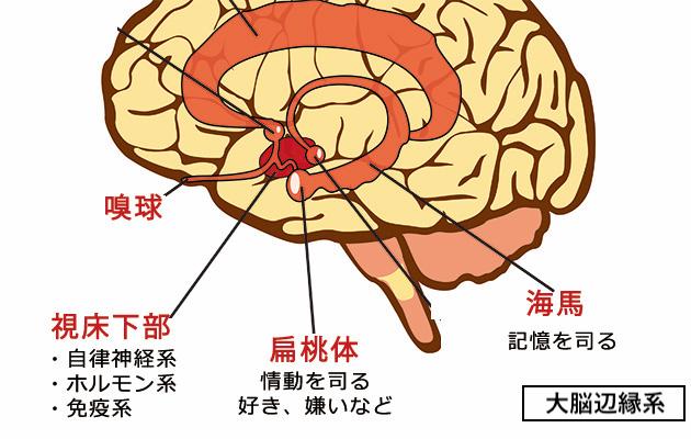 鼻から入った香りが脳に伝わるメカニズム