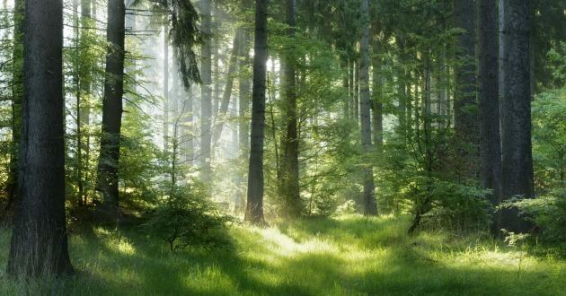 落ち着きを感じる森林の香り