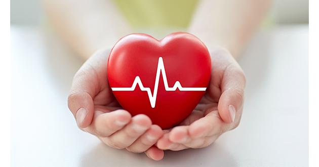 シラジットの強力な抗酸化作用は心臓や循環器の健康に良い事が証明されている